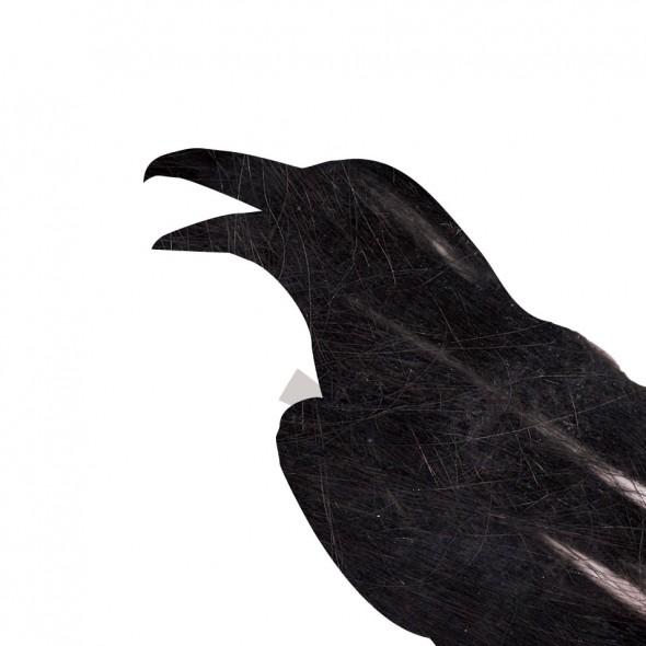 raven_thumb